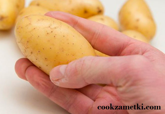 kogda-vvodit-kartofel-v-prikorm1