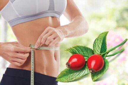 Диета с шиповником для быстрого и эффективного похудения